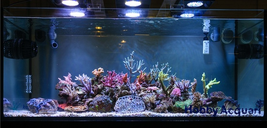 marine coral aquarium with seneye reef.jpg