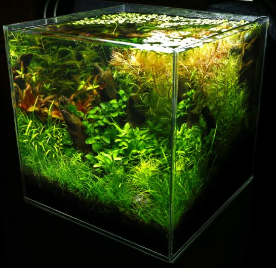 planted_aquarium.PNG